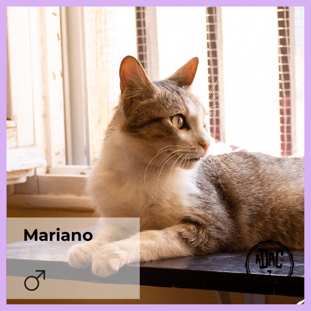 mariano gato macho