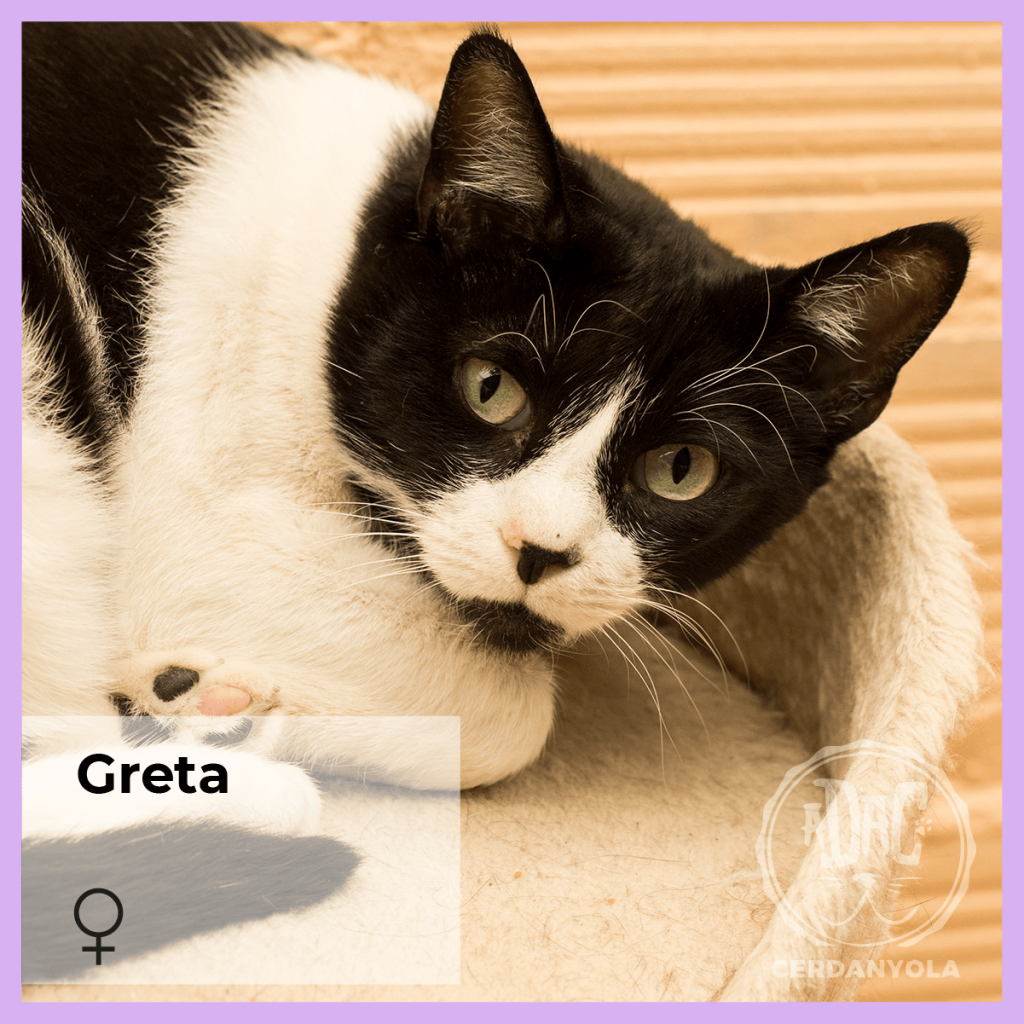 greta gata hembra blanco y negro